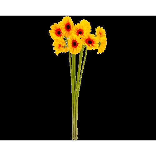Gerbera (Daisy)