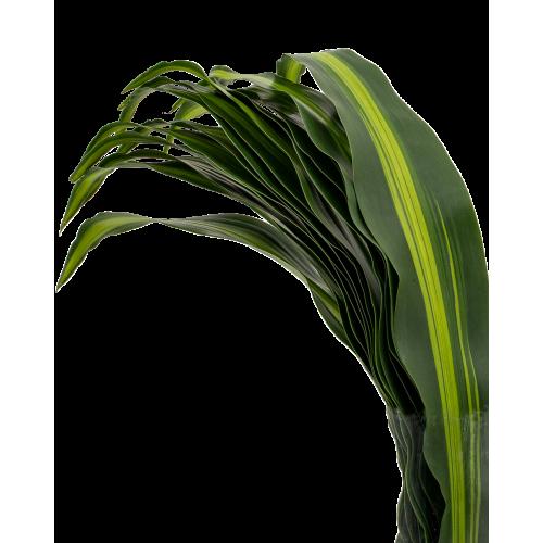 Iron Leaf