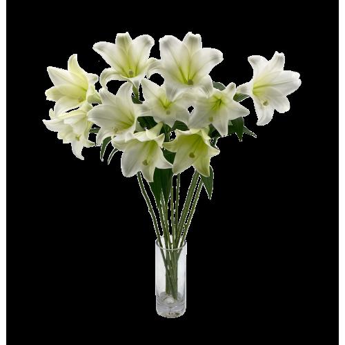Lily - Longiflorum 1 head