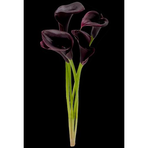 Calla lily Colour